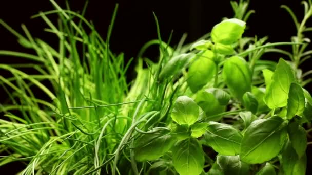 Fresh aromatic herbs(basil,rosemary,chives)isolated on black background, rotating