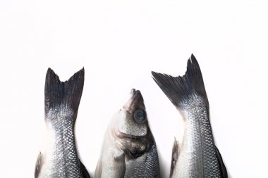 Three fresh sea bass on a light background. Head and two tails.