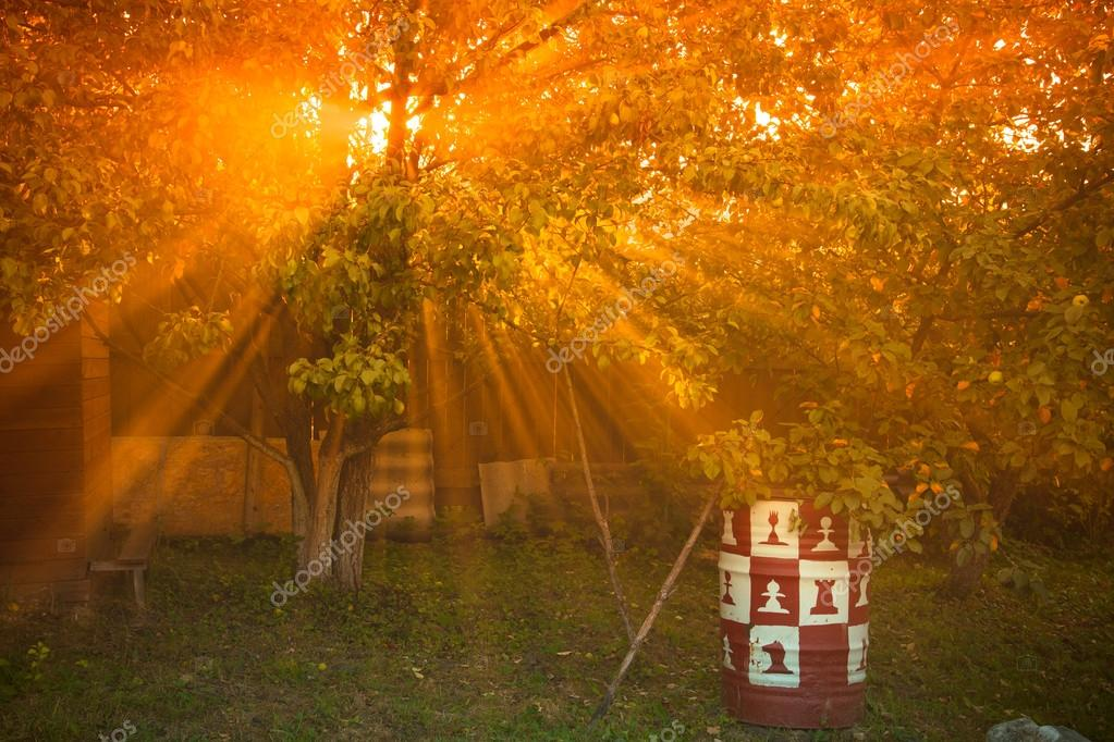 the sun's rays passing through the pear and lighting plot