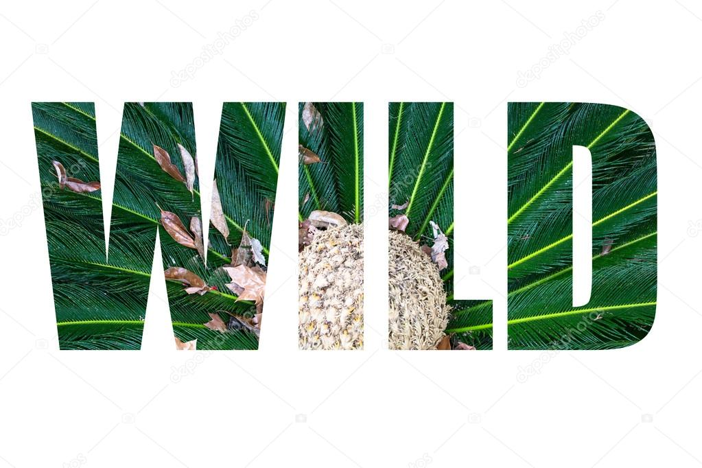 Word WILD over Leaves of palm tree top view similar to peacock f