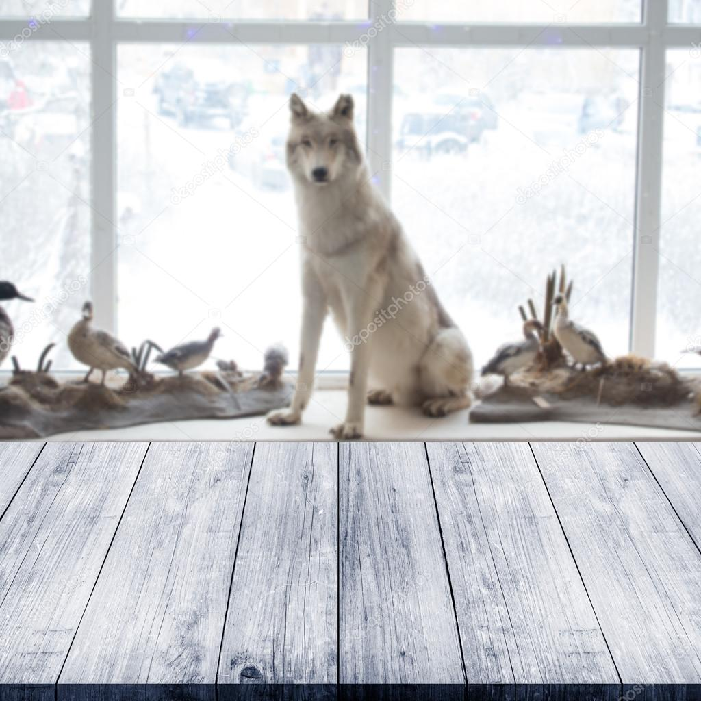 Wolf and birds at museum. View from dark wooden gangway, table o