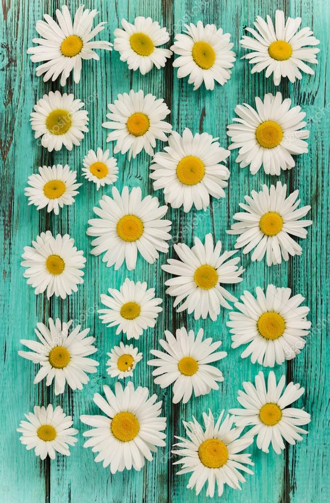Chamomile flowers. Flat lay composition.