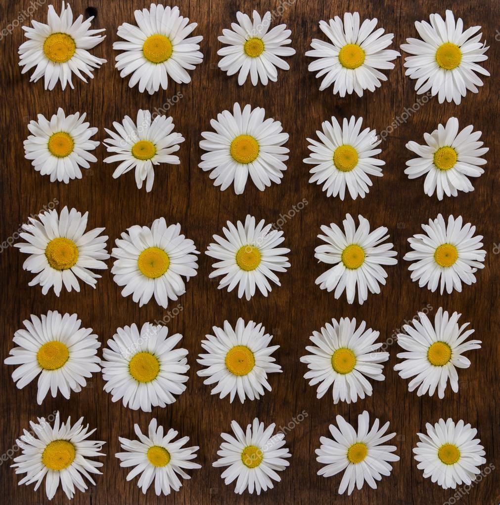 Chamomile flowers on wooden background.