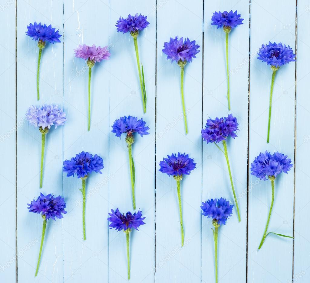 Meadow flowers cornflowers. Flat lay.