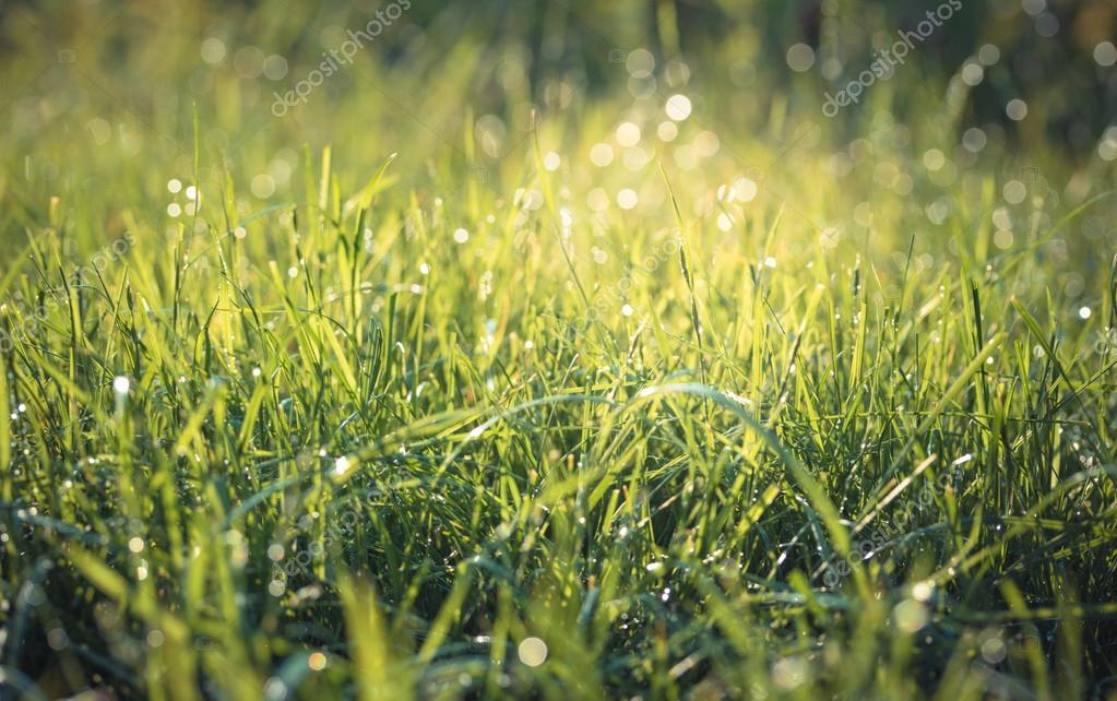 Fresh green grass with water drops. Vintage toned.
