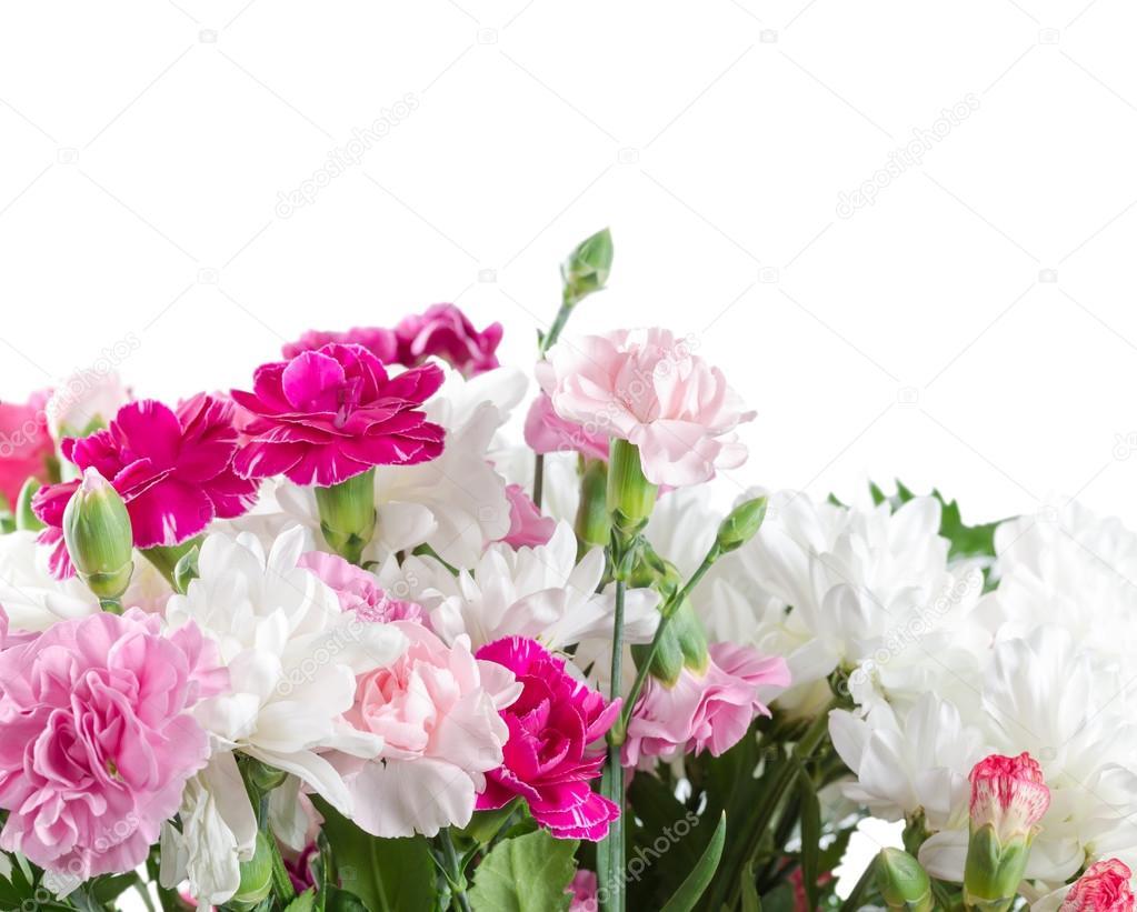 Pink And White Carnation Flowers Stock Photo Natalyka 65042223