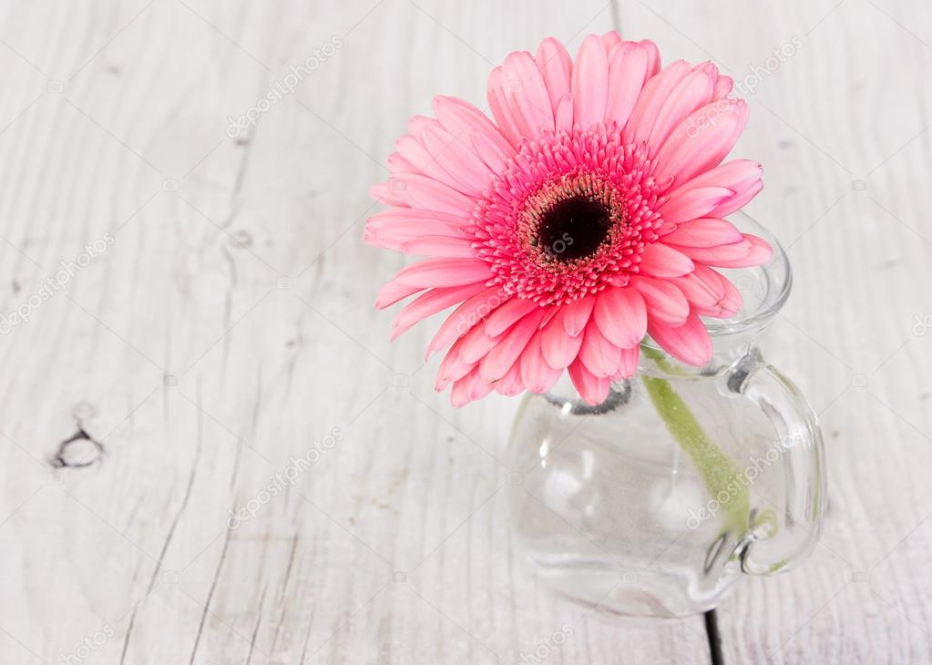 Flower pink gerbera in a glass vase