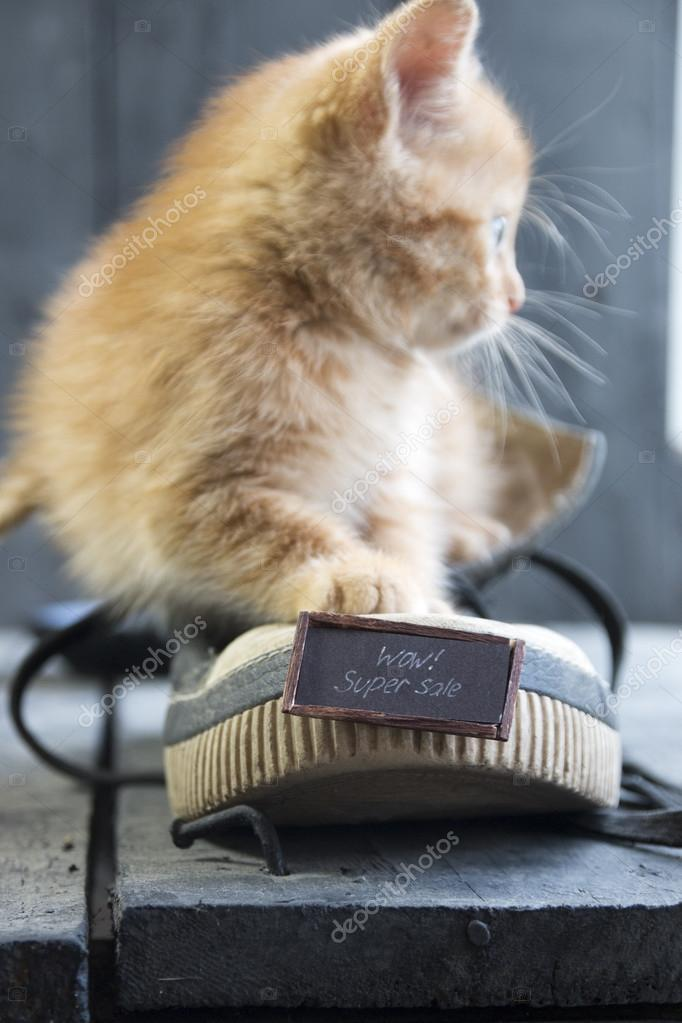 Идея фото с котенком