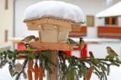 Fényképek színes madarak madarak (a mell), Ausztria