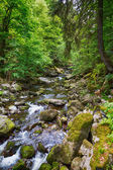 Torrente nella foresta bavarese