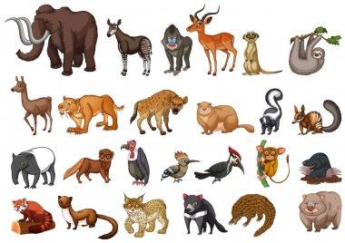 Different type of wild animals on white