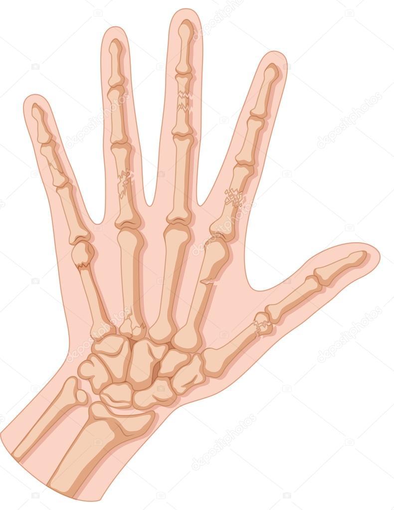 binnenkant hand