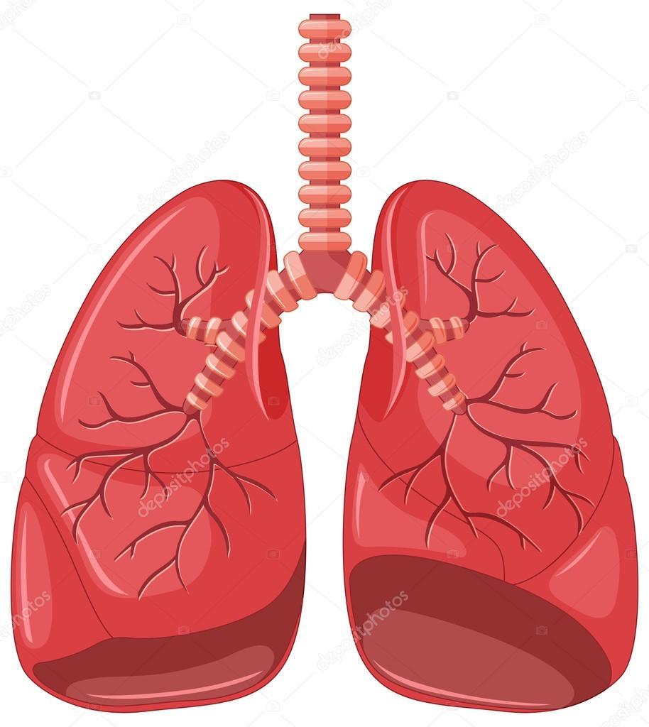 Diagrama de pulmón neumonía — Vector de stock © interactimages ...
