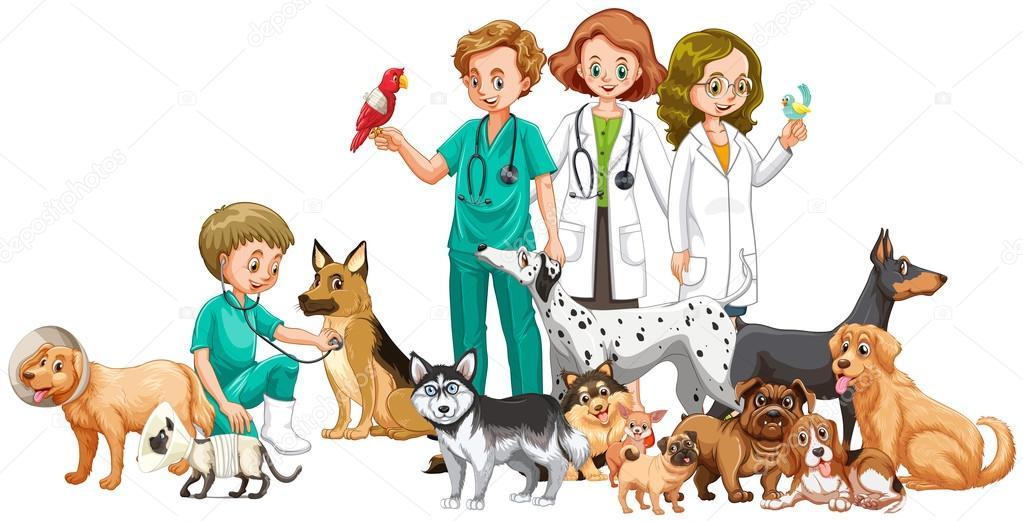 Veterinarios Y Muchos Animales