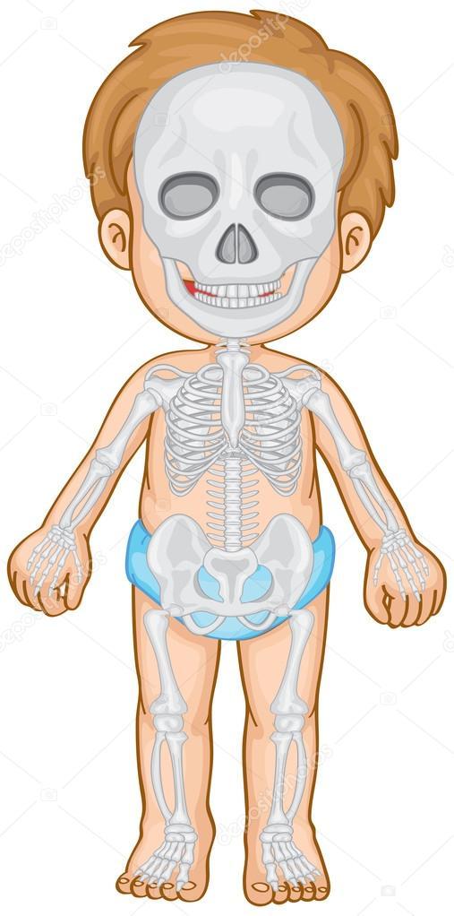 Skelett-Systems in menschlichen Jungen — Stockvektor ...