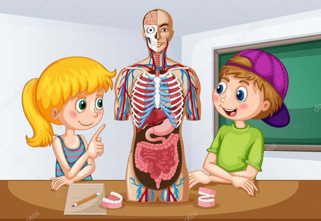 Alunos a aprender sobre a anatomia humana — Vetor de Stock ...