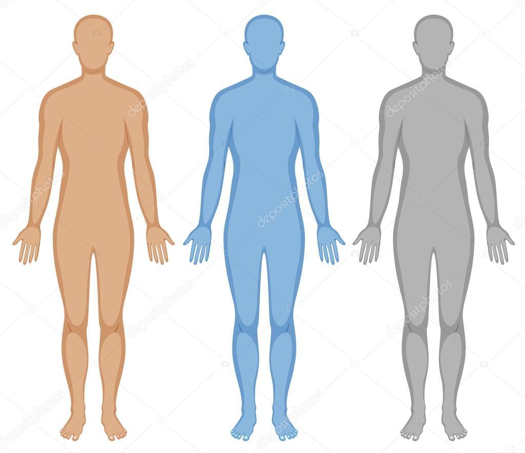 Esquema del cuerpo humano en tres colores — Vector de stock ...