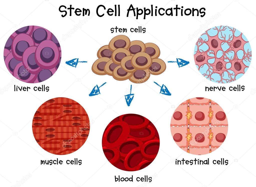 Diagrama de diferentes células — Archivo Imágenes Vectoriales ...