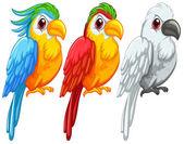 papoušci ilustrace