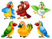 ptáci ilustrace