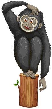 Gibbon Illustration
