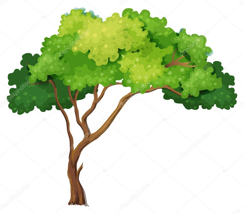 Vector Illustration Tree: Stock Vector © Interactimages #54093011