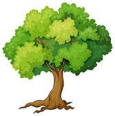 Fényképek fa