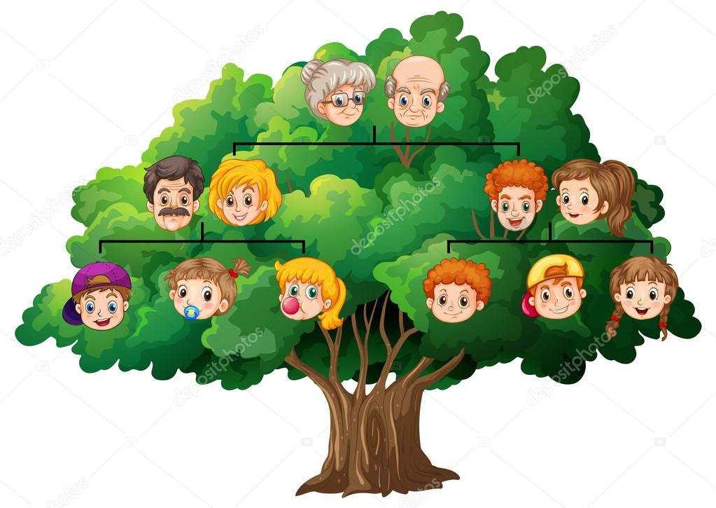 Soy Ağacı Stok Vektör Interactimages 59250925