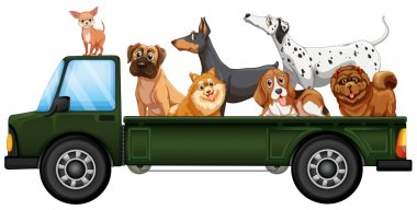 Truck and dogs