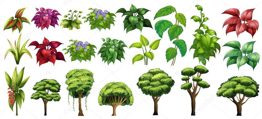 Rboles y flores vector de stock 68061741 depositphotos for Arboles y plantas para jardin