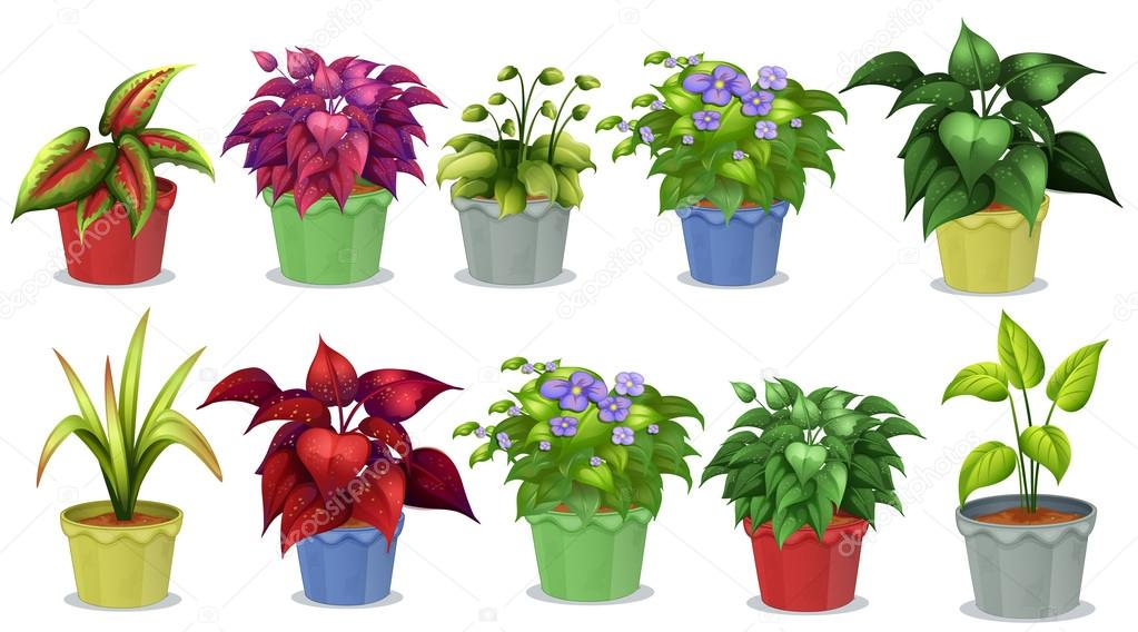 Plantas en maceta vector de stock interactimages 68062473 for Diferentes tipos de plantas ornamentales
