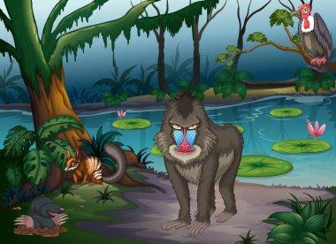 Animals and pond