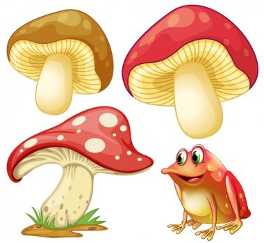 Fresh mushrooms and red frog