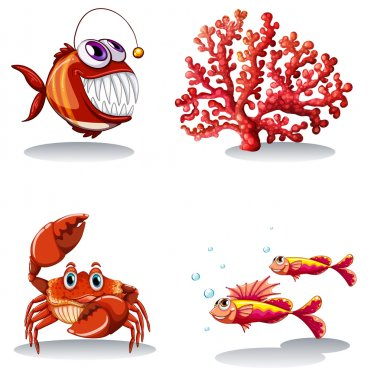 Sea animals and coral reef