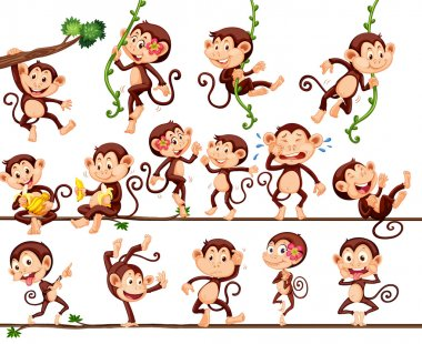 Monkeys doing different actions