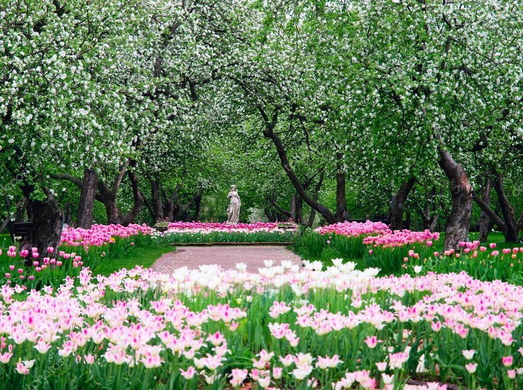 фото с яблоней цветущей коломенское определить точную