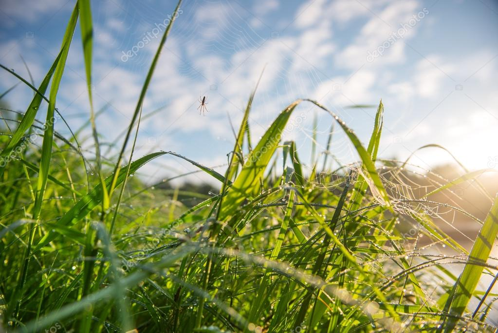 Close-up of fresh grass with dew