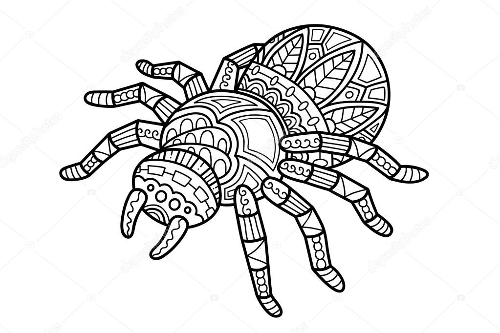 drawings cute spider  cute spider outline — stock vector