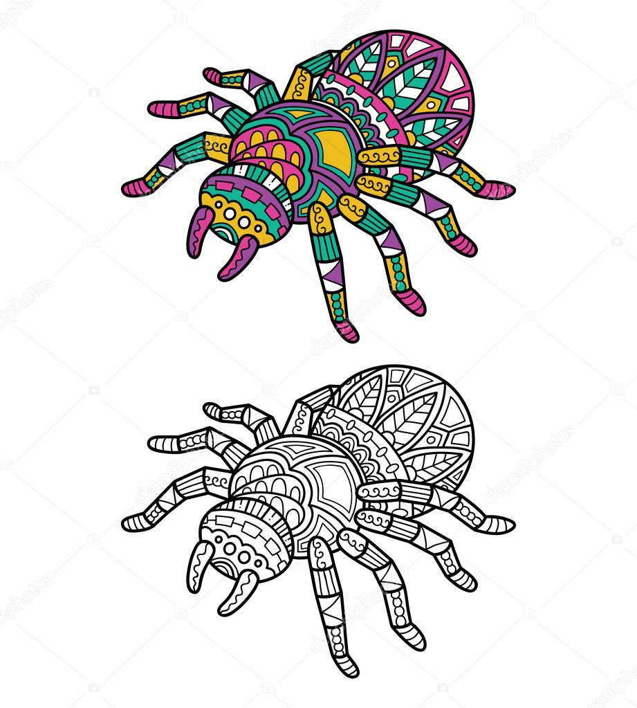 Sevimli örümcek Boyama Sayfası Stok Vektör Boyusya 96521188