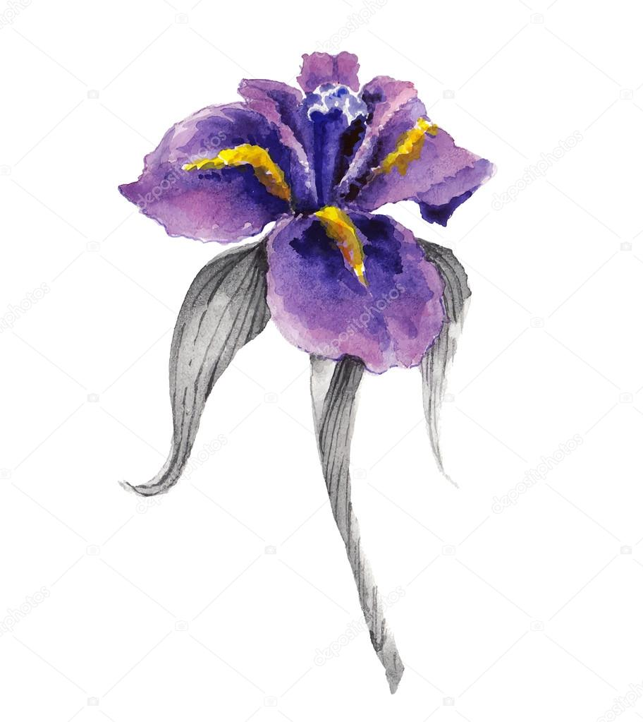Violet Watercolor Iris Flower Stock Vector Natalypaint 72744059