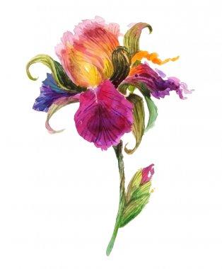 Beautiful watercolor iris flower. Watercolor floral illustration stock vector