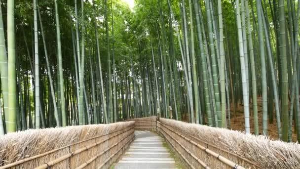 Pohled z bambusových lesů, Arashiyama, Kjóto, Japonsko-nakloněná rovina