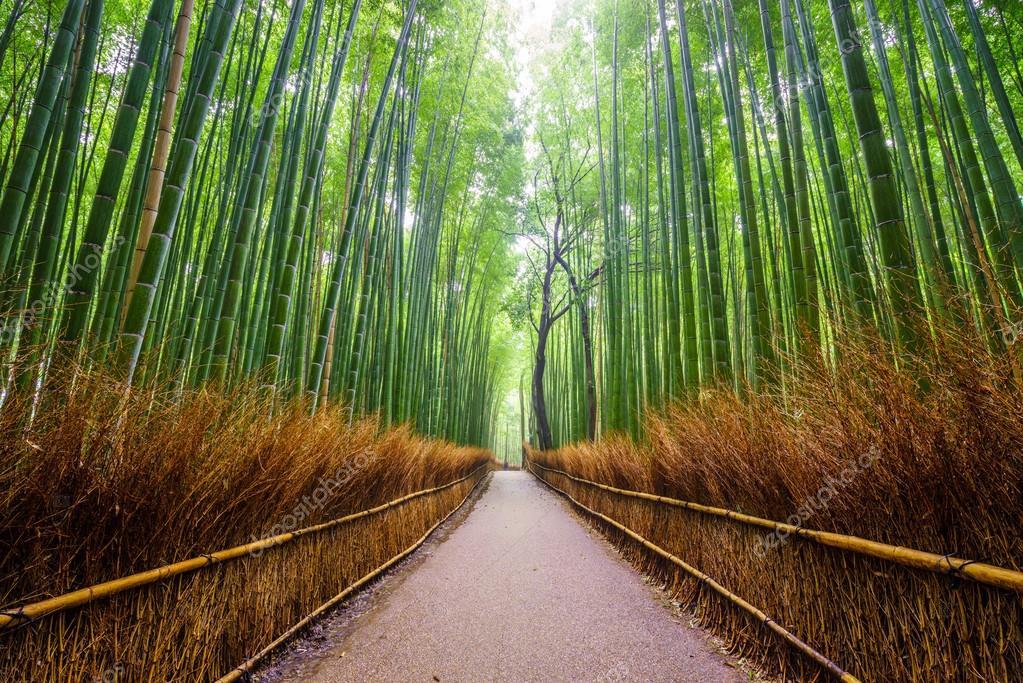 Path to bamboo forest, Arashiyama, Kyoto, Japa