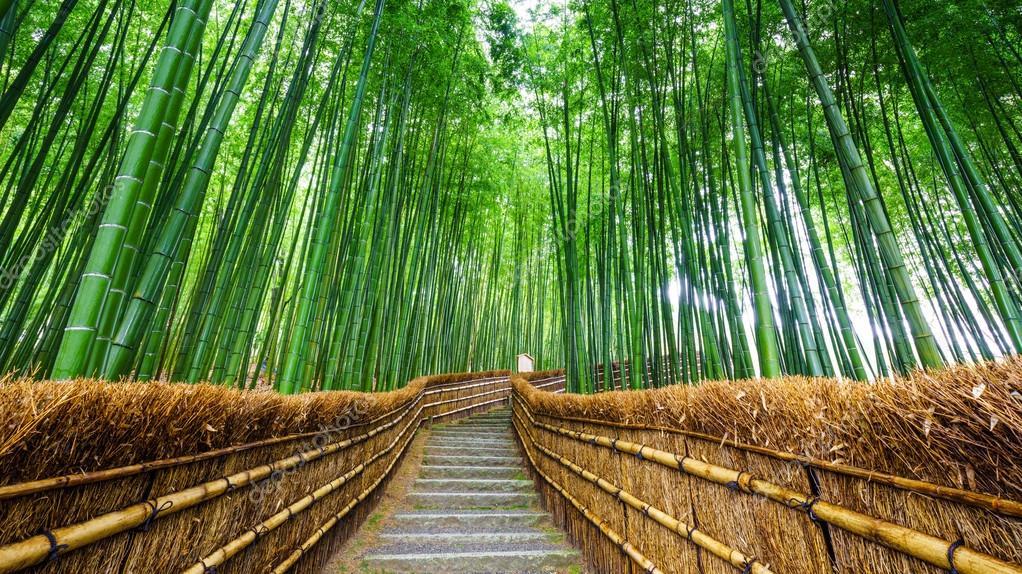 Pfad Zum Bambus Wald Arashiyama Kyoto Japan Stockfoto C Lkunl