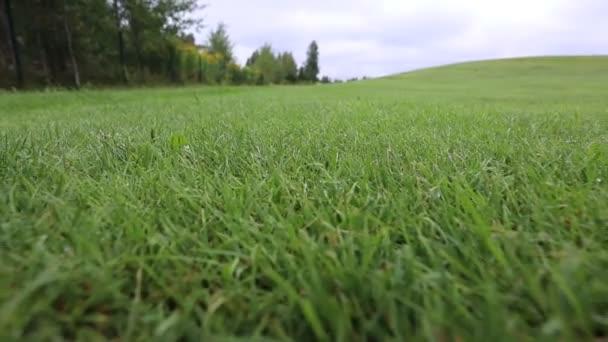 Ein Golfer bereitete sich auf einen Schlag mit einem Putter auf dem grünen Untergrund vor
