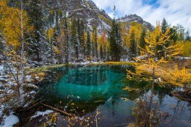 Blue spring lake Golden autumn in Altai, Aktash region.