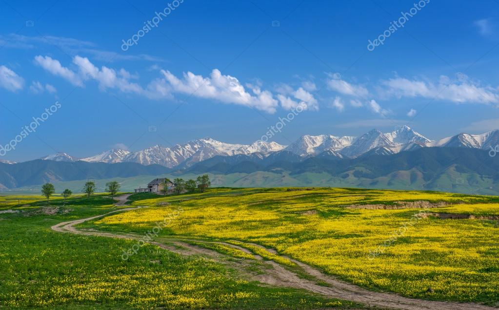 A lone house in the fields of rape on the background of majestic mountains.