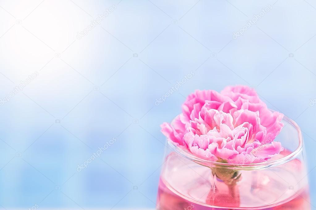 Carnation flower in glass