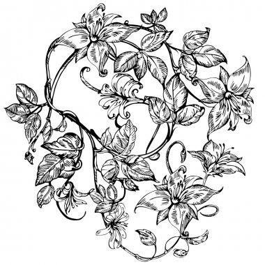 Vintage elegant flowers. Black and white vector illustration. Honeysuckle flower. Botany.