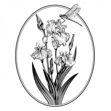 Vintage elegant flowers. Black and white vector illustration. Iris flower. Botany.